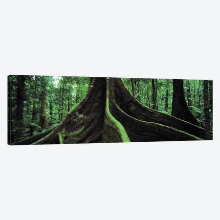 Giant Tree Roots, Daintree National Park, Far North, Queensland, Australia Canvas Print #PIM4846} by Panoramic Images Canvas Wall Art