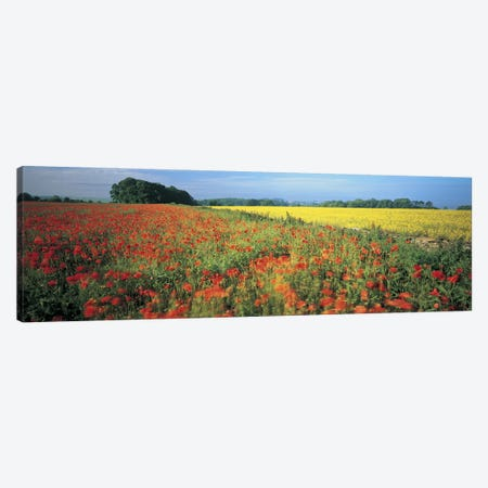 Floral Valley Landscape, Avon Valley, Near Bath, Somerset, England, United Kingdom Canvas Print #PIM4862} by Panoramic Images Art Print