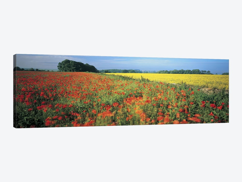 Floral Valley Landscape, Avon Valley, Near Bath, Somerset, England, United Kingdom by Panoramic Images 1-piece Canvas Art Print