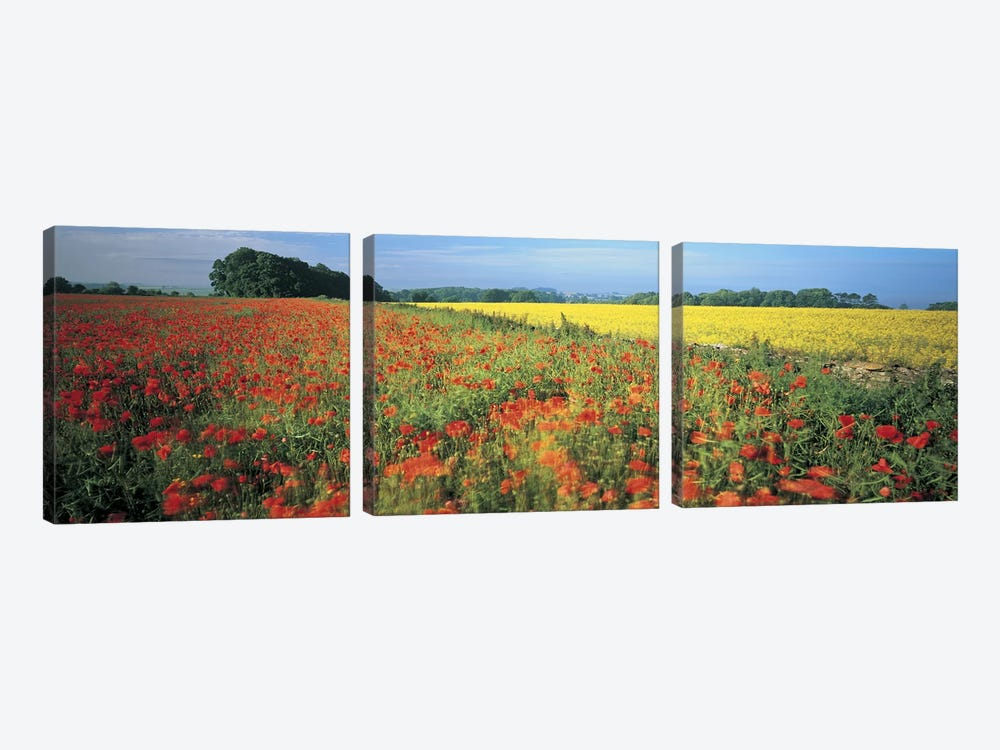 Floral Valley Landscape, Avon Valley, Near Bath, Somerset, England, United Kingdom by Panoramic Images 3-piece Canvas Print