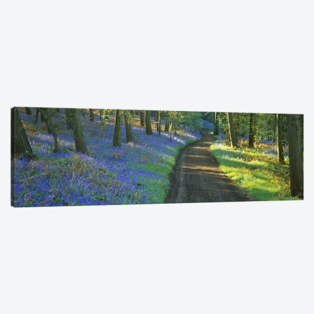 Bluebells Along A Dirt Road, Gloucestershire, Cotswolds, England, United Kingdom Canvas Print #PIM4877} by Panoramic Images Canvas Print