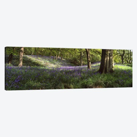 Bluebells In A Forest, Newton County, Texas, USA Canvas Print #PIM4972} by Panoramic Images Canvas Print