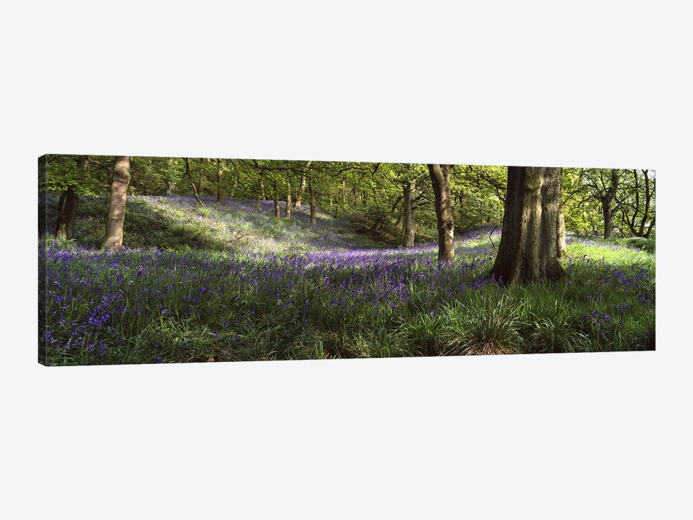 Bluebells In A Forest, Newton County, Texas, USA by Panoramic Images 1-piece Canvas Art Print