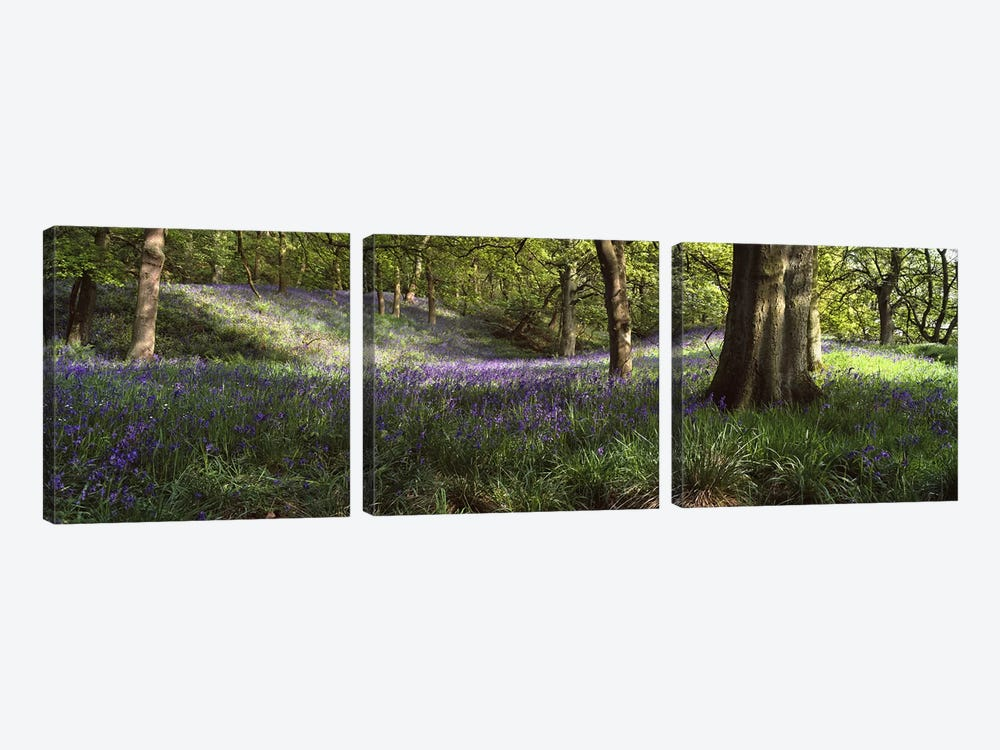 Bluebells In A Forest, Newton County, Texas, USA by Panoramic Images 3-piece Canvas Print
