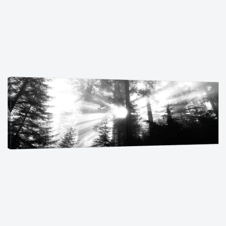 Misty Sunshine, Redwood National Park, California, USA Canvas Print #PIM497} by Panoramic Images Canvas Wall Art