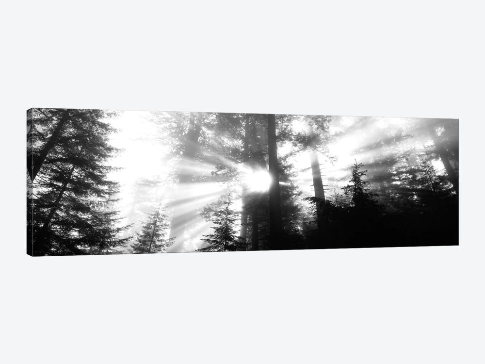 Misty Sunshine, Redwood National Park, California, USA by Panoramic Images 1-piece Canvas Art Print
