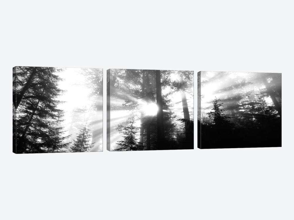 Misty Sunshine, Redwood National Park, California, USA by Panoramic Images 3-piece Art Print