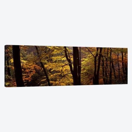 Mid Section View Of Trees, Littlebeck, North Yorkshire, England, United Kingdom Canvas Print #PIM4990} by Panoramic Images Canvas Print