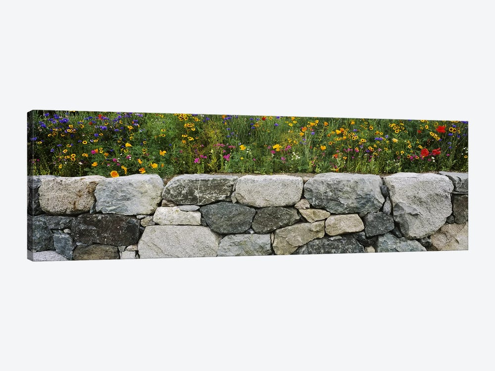 Wildflowers growing near a stone wall, Fidalgo Island, Skagit County, Washington State, USA by Panoramic Images 1-piece Canvas Wall Art