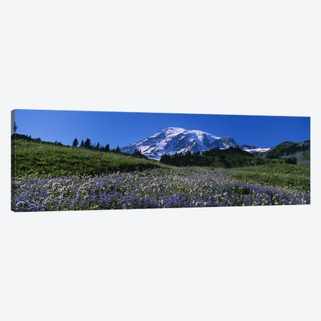 Wildflowers On A Landscape, Mt Rainier National Park, Washington State, USA #3 Canvas Print #PIM5040} by Panoramic Images Canvas Artwork