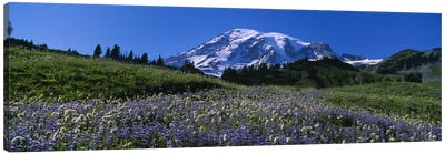 Wildflowers On A Landscape, Mt Rainier National Park, Washington State, USA #3 Canvas Print #PIM5040