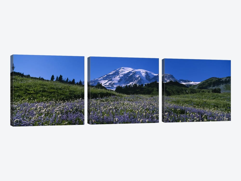 Wildflowers On A Landscape, Mt Rainier National Park, Washington State, USA #3 by Panoramic Images 3-piece Canvas Artwork