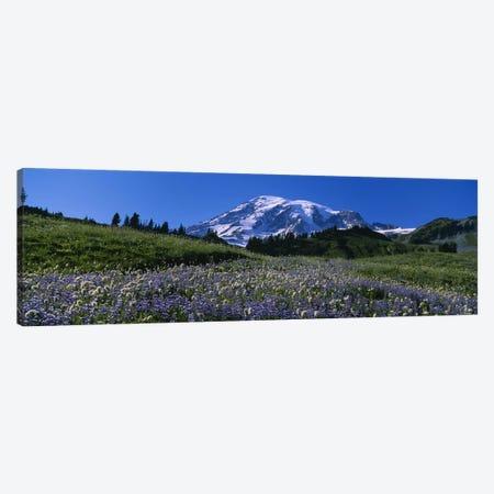Wildflowers On A Landscape, Mt Rainier National Park, Washington State, USA #3 Canvas Print #PIM5040} by Panoramic Images Canvas Artwork