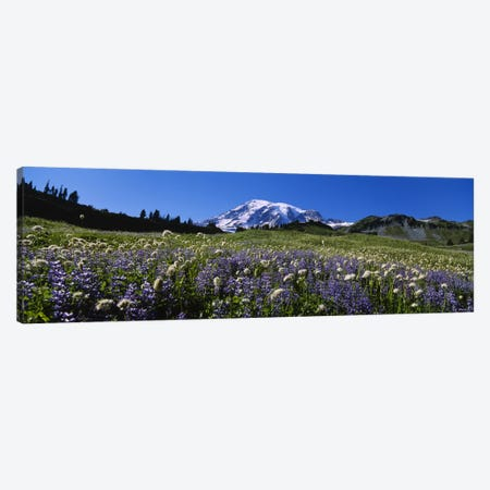 Wildflowers On A Landscape, Mt Rainier National Park, Washington State, USA #4 Canvas Print #PIM5041} by Panoramic Images Canvas Wall Art