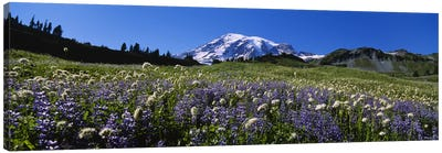 Wildflowers On A Landscape, Mt Rainier National Park, Washington State, USA #4 Canvas Print #PIM5041
