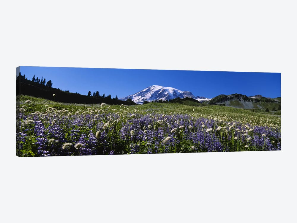 Wildflowers On A Landscape, Mt Rainier National Park, Washington State, USA #4 by Panoramic Images 1-piece Canvas Print