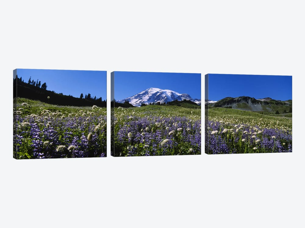 Wildflowers On A Landscape, Mt Rainier National Park, Washington State, USA #4 by Panoramic Images 3-piece Canvas Print