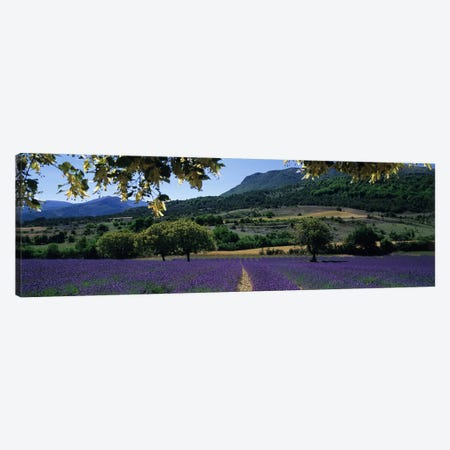 Countryside Landscape I, Provence-Alpes-Cote d'Azur France Canvas Print #PIM5043} by Panoramic Images Canvas Artwork