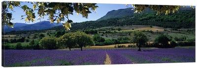 Countryside Landscape I, Provence-Alpes-Cote d'Azur France Canvas Print #PIM5043