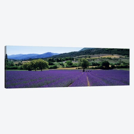 Countryside Landscape II, Provence-Alpes-Cote d'Azur France Canvas Print #PIM5044} by Panoramic Images Canvas Print