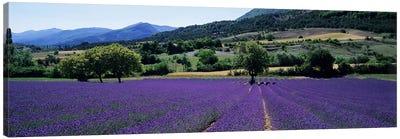 Countryside Landscape II, Provence-Alpes-Cote d'Azur France Canvas Print #PIM5044