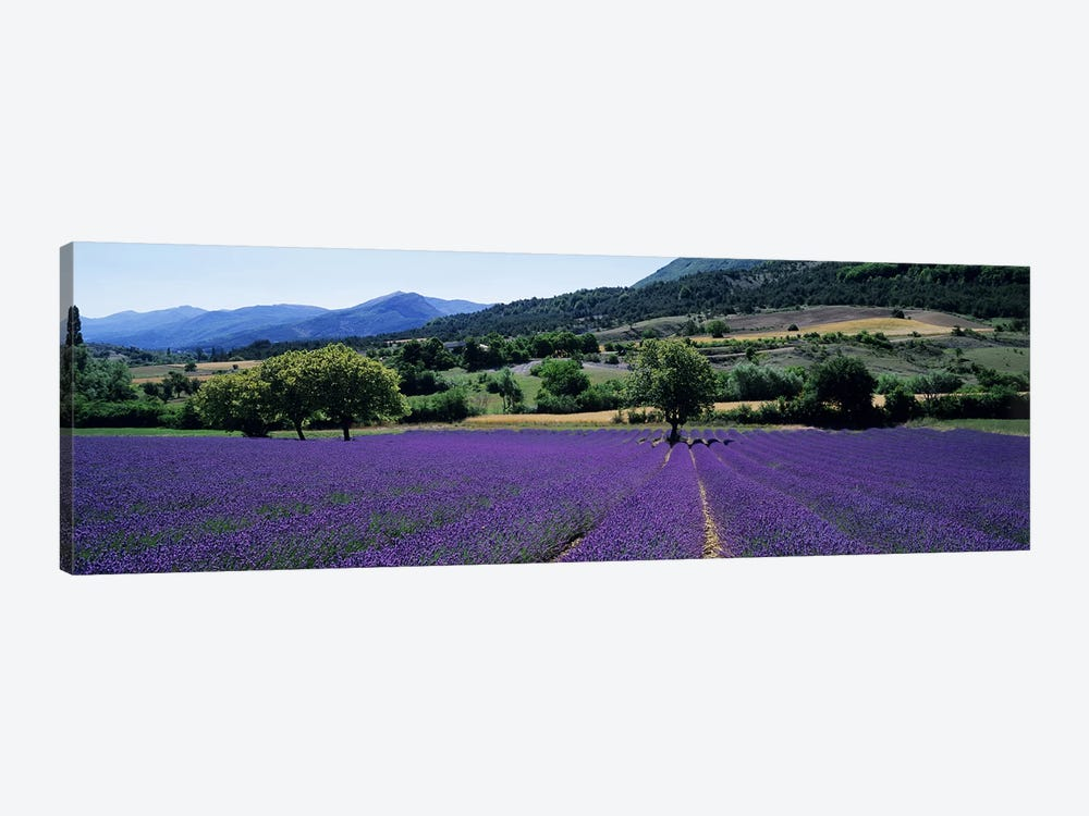Countryside Landscape II, Provence-Alpes-Cote d'Azur France by Panoramic Images 1-piece Canvas Art