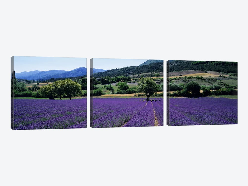 Countryside Landscape II, Provence-Alpes-Cote d'Azur France by Panoramic Images 3-piece Canvas Wall Art