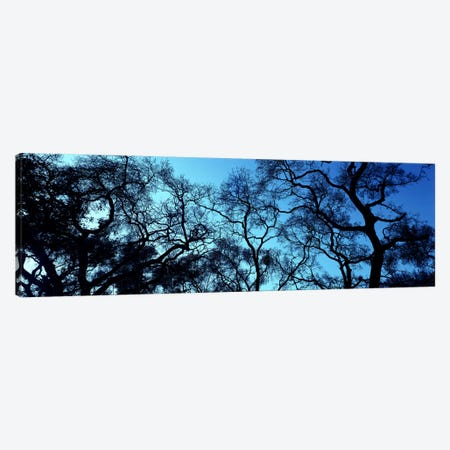 Silhouette of an Oak tree, Oakland, California, USA Canvas Print #PIM5054} by Panoramic Images Canvas Artwork