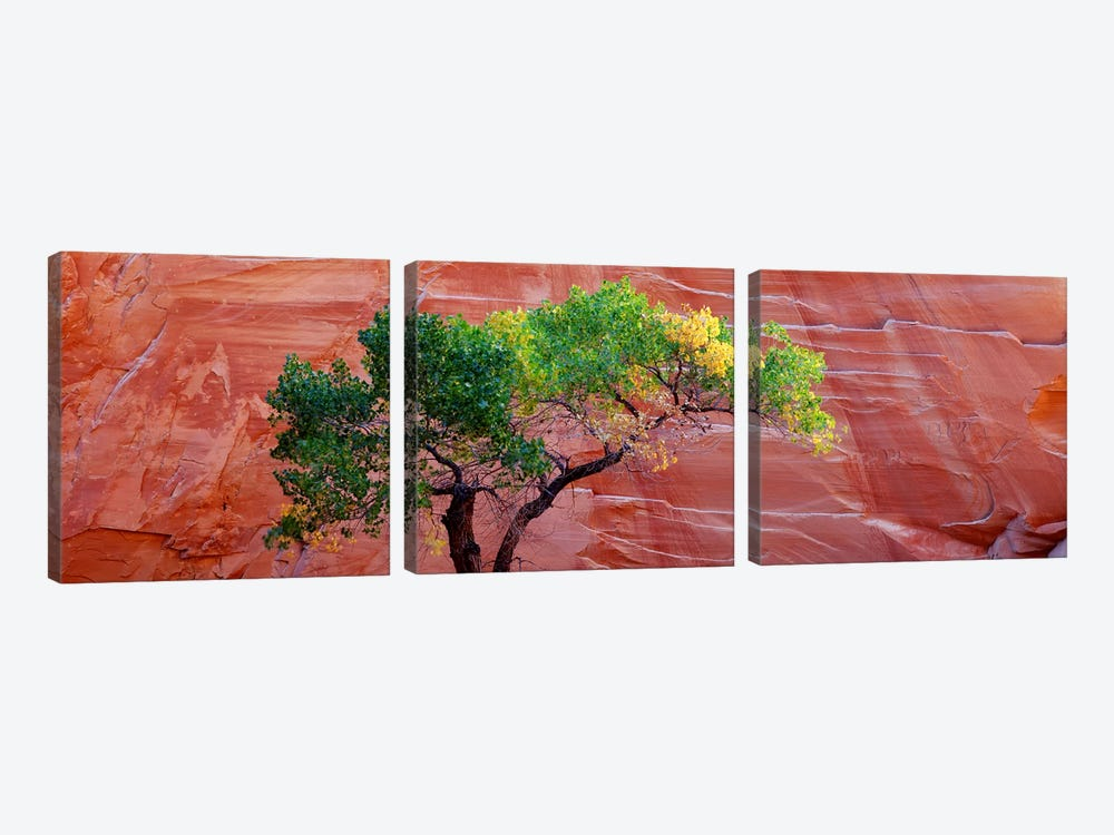 Low Angle View Of A Cottonwood Tree In Front Of A Sandstone Wall, Escalante National Monument, Utah, USA by Panoramic Images 3-piece Canvas Artwork
