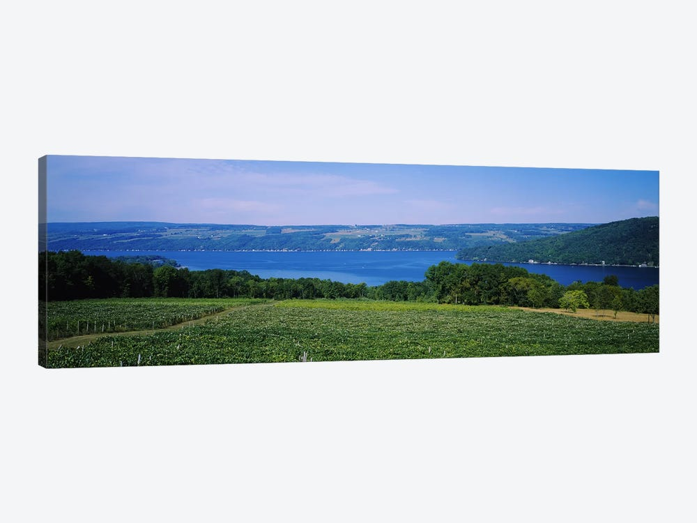 Vineyard Landscape, Keuka Lake, Finger Lakes, New York, USA by Panoramic Images 1-piece Canvas Art