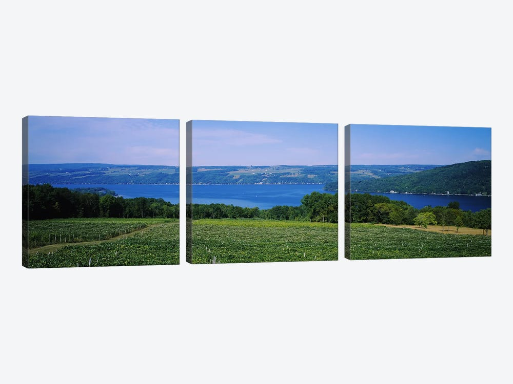 Vineyard Landscape, Keuka Lake, Finger Lakes, New York, USA by Panoramic Images 3-piece Canvas Artwork