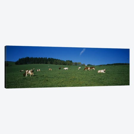 Herd of cows grazing in a field, St. Peter, Black Forest, Germany Canvas Print #PIM5115} by Panoramic Images Canvas Print