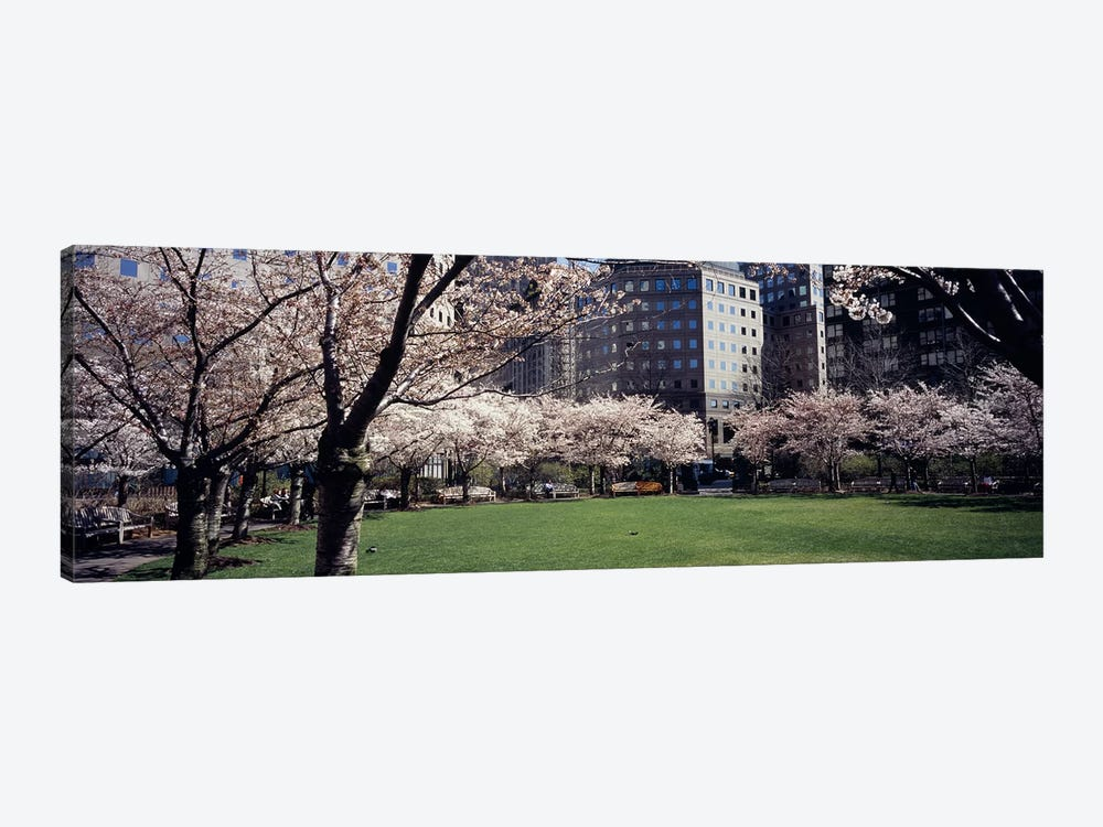 Trees in a park, Central Park, Manhattan, New York City, New York State, USA by Panoramic Images 1-piece Canvas Art Print