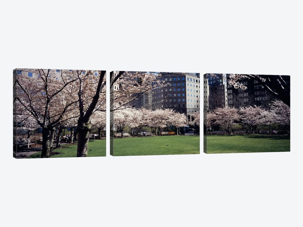 Trees in a park, Central Park, Manhattan, New York City, New York State, USA by Panoramic Images 3-piece Canvas Art Print