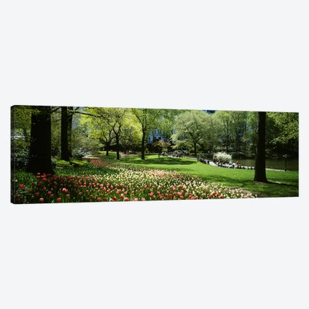 Flowers in a park, Central Park, Manhattan, New York City, New York State, USA Canvas Print #PIM5141} by Panoramic Images Art Print