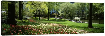 Flowers in a park, Central Park, Manhattan, New York City, New York State, USA Canvas Art Print