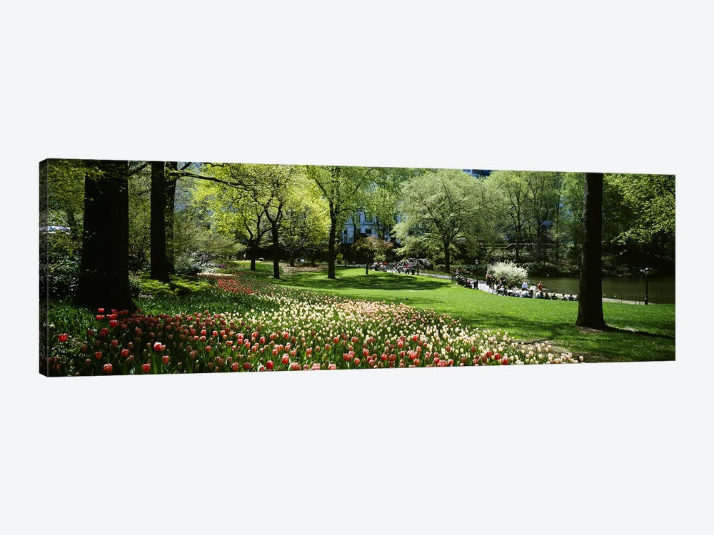 Flowers in a park, Central Park, Manhattan, New York City, New York State, USA by Panoramic Images 1-piece Canvas Art