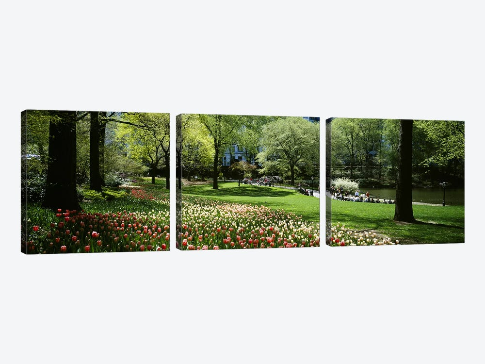 Flowers in a park, Central Park, Manhattan, New York City, New York State, USA by Panoramic Images 3-piece Canvas Wall Art