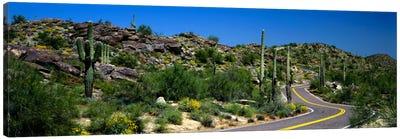 Desert Landscape Along A Winding Road, Phoenix, Arizona, USA Canvas Art Print
