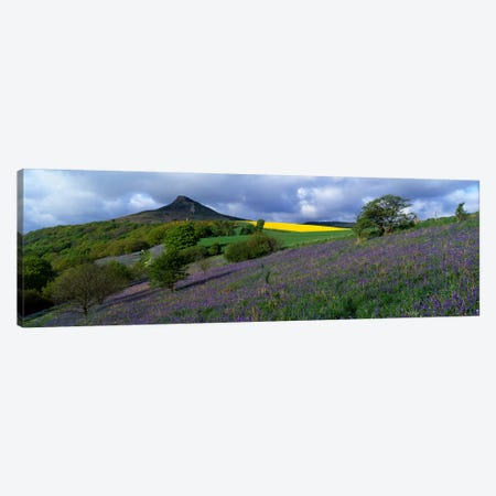 Bluebell Flowers In A FieldCleveland, North Yorkshire, England, United Kingdom Canvas Print #PIM5212} by Panoramic Images Canvas Art Print