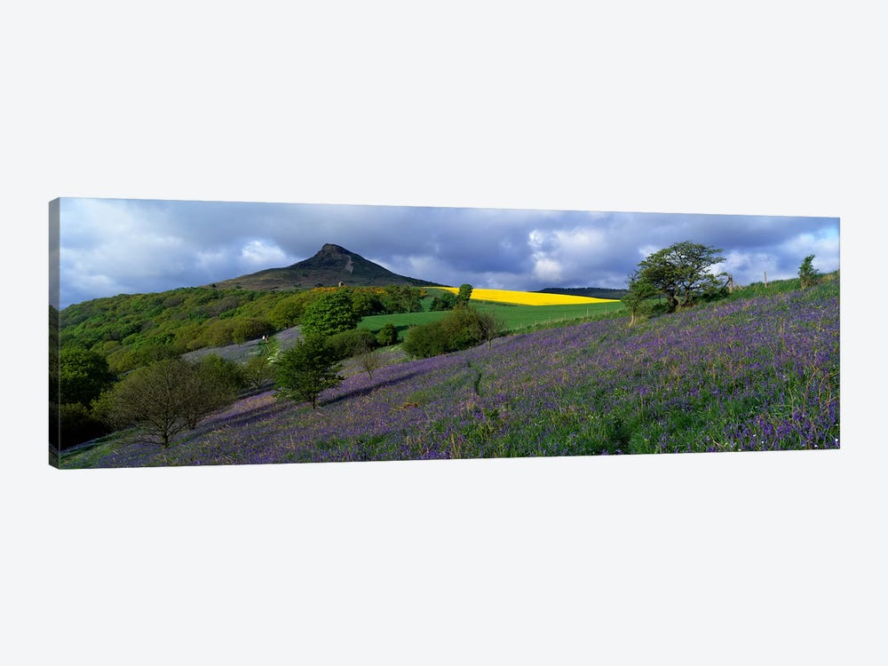 Bluebell Flowers In A FieldCleveland, North Yorkshire, England, United Kingdom by Panoramic Images 1-piece Canvas Artwork