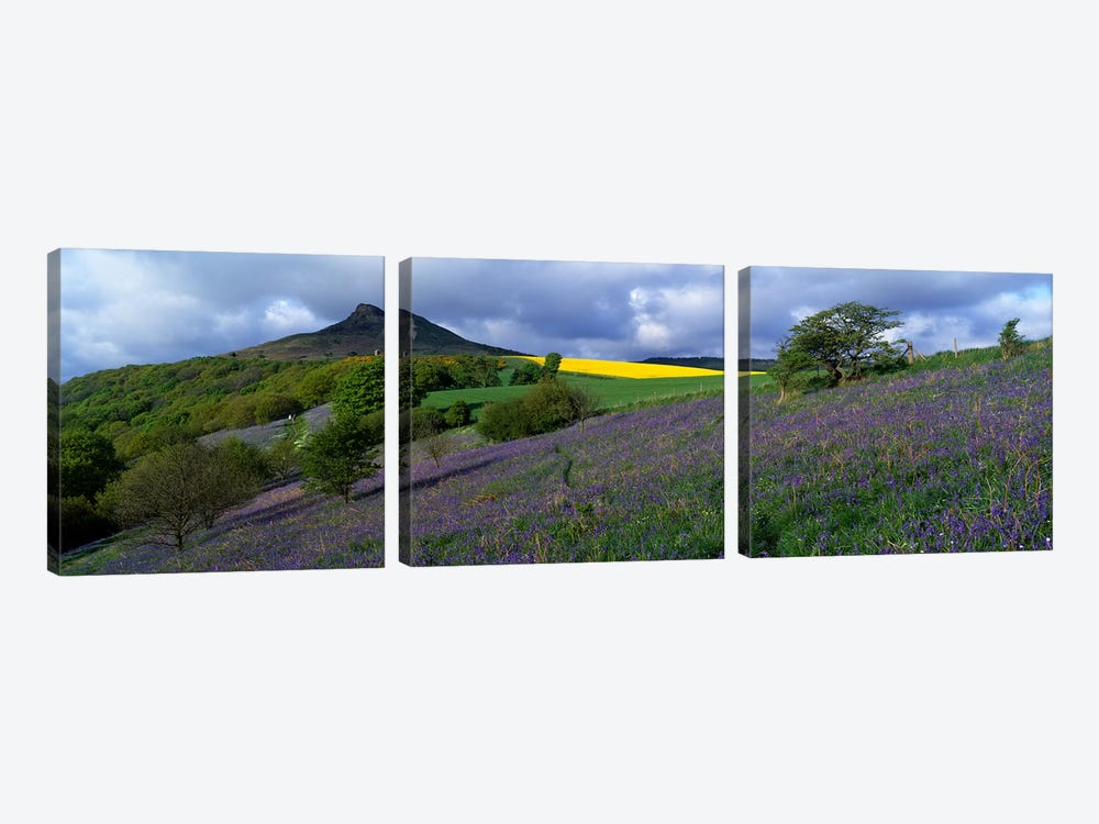 Bluebell Flowers In A FieldCleveland, North Yorkshire, England, United Kingdom by Panoramic Images 3-piece Canvas Wall Art