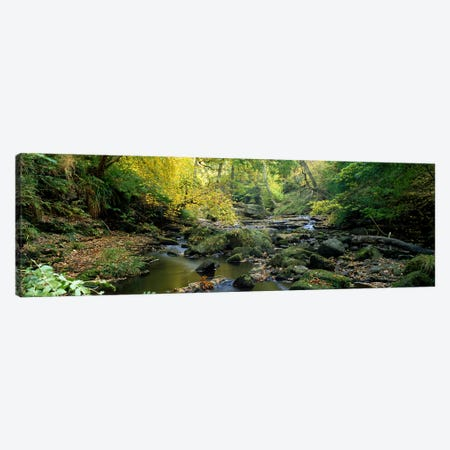 Forest Landscape Along Eller Beck, North Yorkshire, England, United Kingdom Canvas Print #PIM5218} by Panoramic Images Canvas Art Print