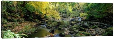 Forest Landscape Along Eller Beck, North Yorkshire, England, United Kingdom Canvas Print #PIM5218