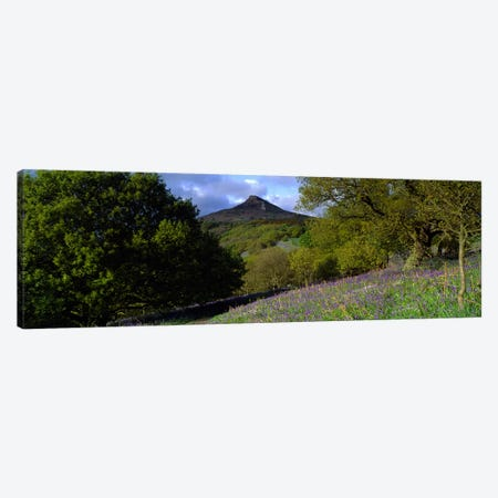 Bluebell Flowers In A FieldCleveland, North Yorkshire, England, United Kingdom Canvas Print #PIM5221} by Panoramic Images Canvas Wall Art