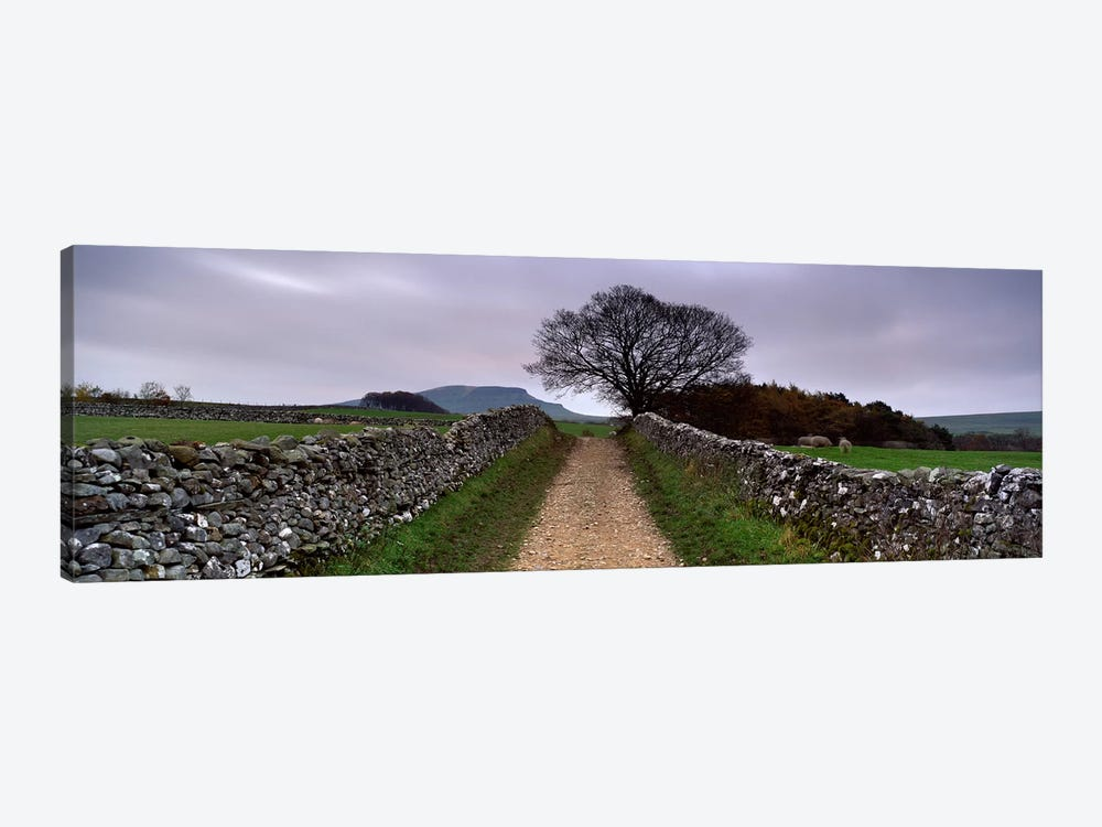 Stone Walls Along A Path, Yorkshire Dales, England, United Kingdom by Panoramic Images 1-piece Canvas Art Print