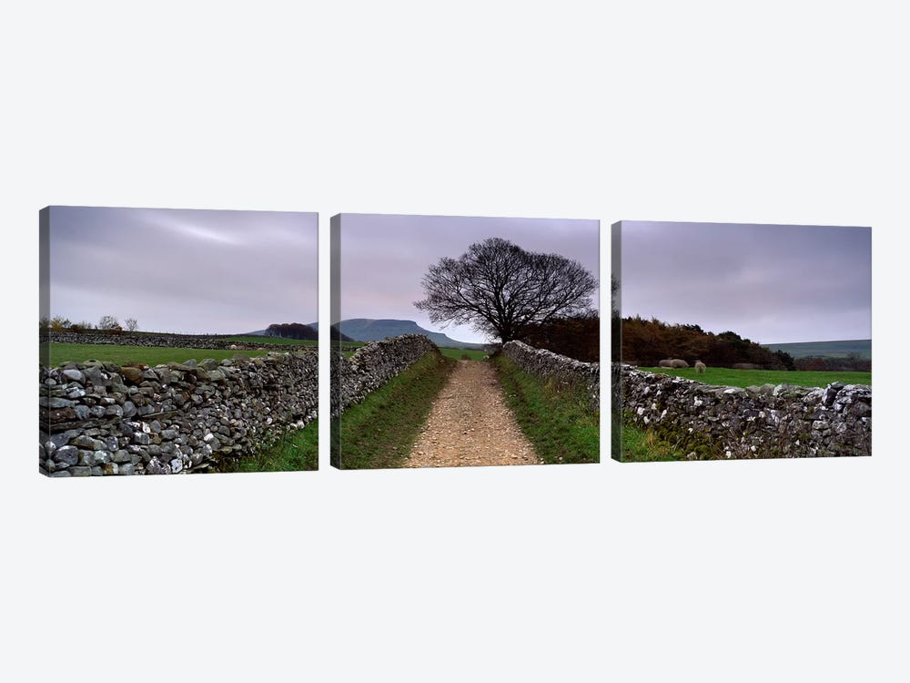 Stone Walls Along A Path, Yorkshire Dales, England, United Kingdom by Panoramic Images 3-piece Canvas Art Print