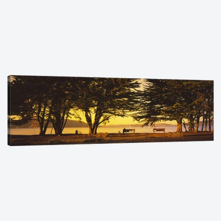 Trees In A Field, Crissy Field, San Francisco, California, USA Canvas Print #PIM5260} by Panoramic Images Canvas Art