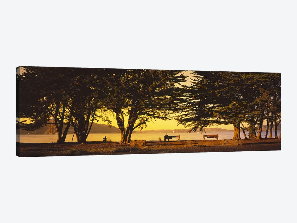 Trees In A Field, Crissy Field, San Francisco, California, USA by Panoramic Images 1-piece Art Print