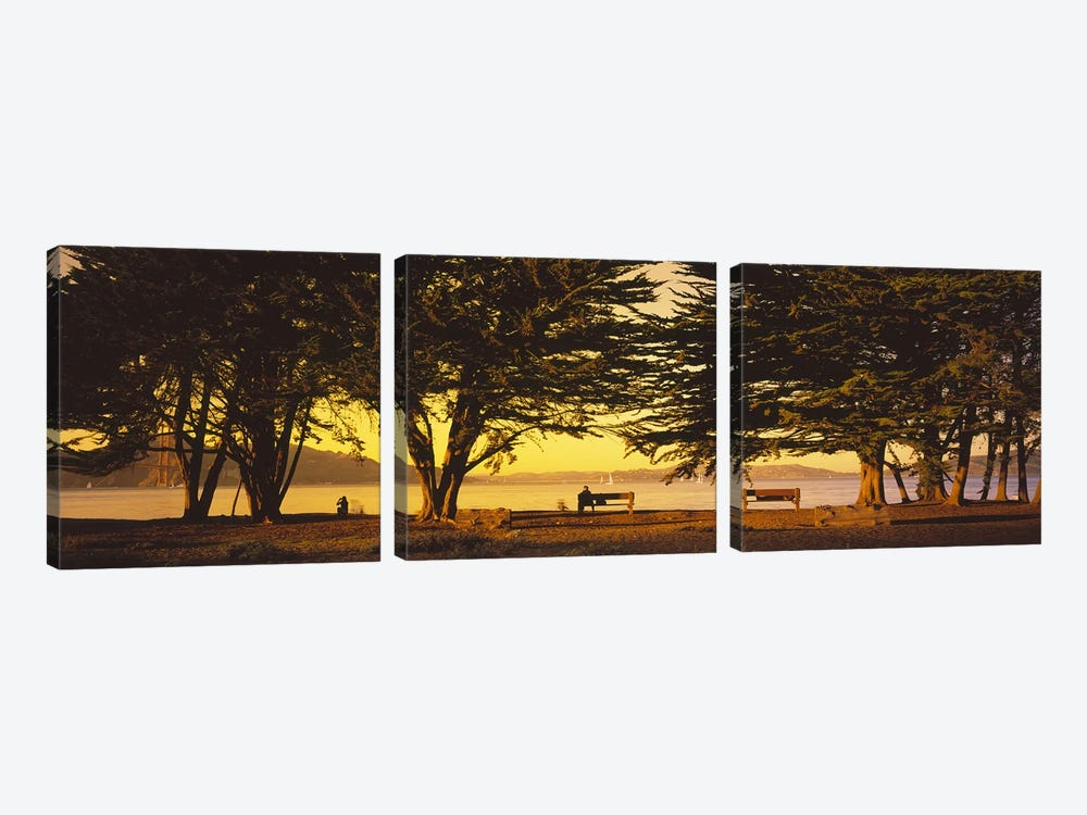 Trees In A Field, Crissy Field, San Francisco, California, USA by Panoramic Images 3-piece Canvas Print